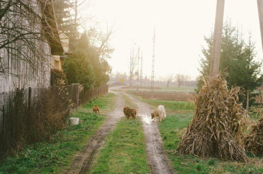one with dogs on the country road by Maclunar