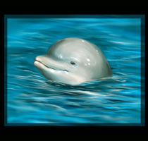 Dolphin Painting by Feyrah