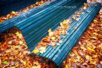 Golden Fall by H3ad0n