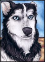 Eyes of a Husky by BecSparrow