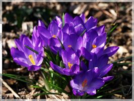 flowers02 by jvg2