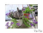 Chinchilla and Flowers by itscheryl
