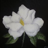 A White Magnolia (Gift) by Dunn95