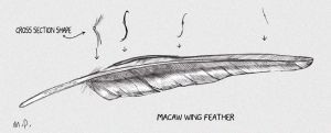 Macaw wing feather by Reptangle