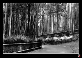 bamboo forest by tensai-riot