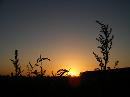 july sunset III by Lucy-Redgrave