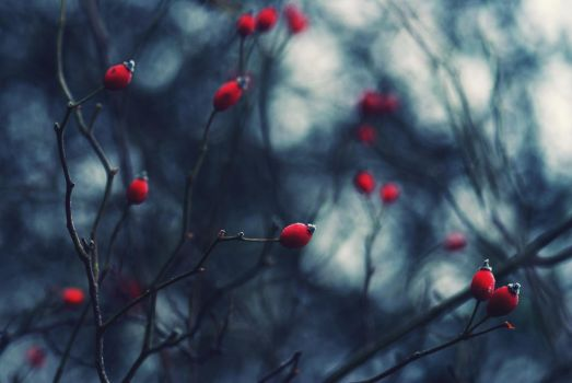 Because December is beautiful by Samantha-meglioli