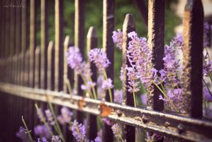 flowered fence by artmobe