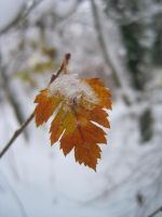 between autumn and winter by myshiver