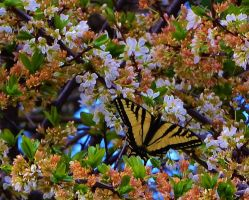 Butterfly in the Blossums by Marilyn958