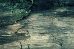 Texture Wood by CD-STOCK