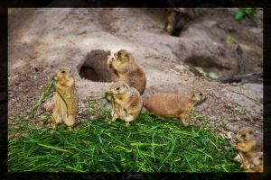 Prairie dogs at lunch by deaconfrost78