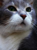 Catface by camilleroc