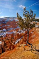 Ent in Bryce by souk1501