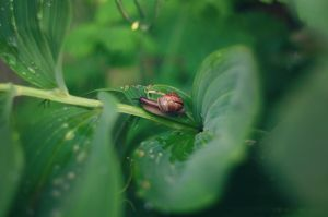 Snail after rain by Winstein