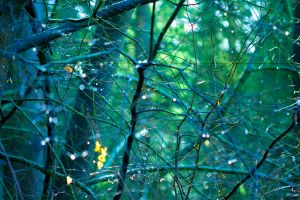 Twisted Branches by redbackspider