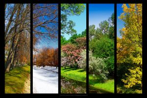The Five Seasons by biretta