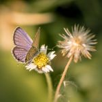 blue winged butterfly #2 by SnapShotDataBase