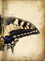 The Old Butterfly by Punkybrewster80