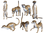 Meerkats PNG Stock by Roys-Art