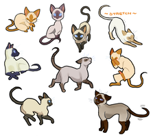 Cats 101 Siamese by Fruichie
