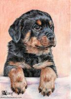 Rottweiler puppy by Azany