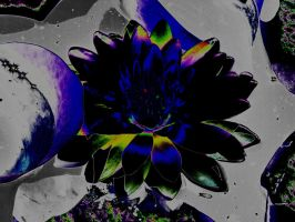 Dark Water Lily by Ginger-PolitiCat
