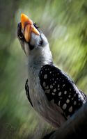 Painterly Hornbill by DeniseSoden