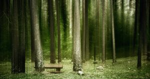 mysterious forest by Perena