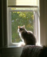 Eowyn In the Window by marienoire