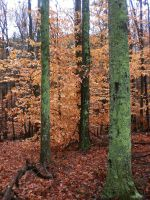 Late Autumn Contrast by dunnalildiffernt