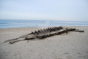 100 year old Ship Wreck by GoodandEvilinc