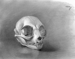 Cat skull by roni-yoffe