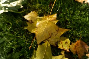 Wasted Leafs by CauterizeSetsFire