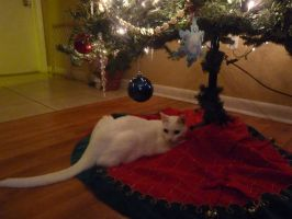 My Cleo Under Our Christmas Tree by Lirshtah8