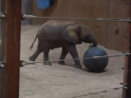 baby elephant by Endeavor4ever