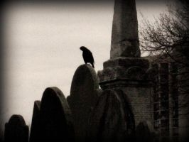 The Raven by Isiru