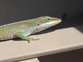 Green Anole 2 by Angelwolf778
