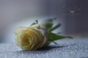 Nights In White Satin by Davils-Photography