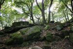 Forest Stock 097 by Malleni-Stock