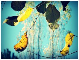 Golden leafes by ItsJustAboutColors