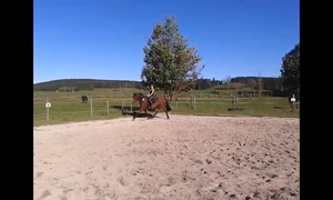 Movement by RvS-RiverineStables