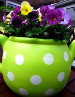 Flowerbed Teapot by ItsCrazyConnor