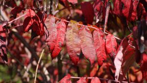 Leaves 008 by MonsterBrand-stock
