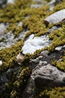 Rock Vs Moss by FreeakStock