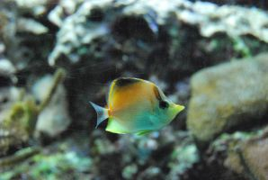 Circle Fish by EandT2-17