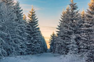 Winter Wonderland by hessbeck-fotografix