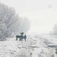 Winter Greeting by XanaduPhotography