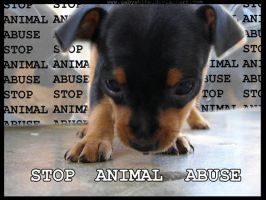 Stop Animal Abuse II by gabywhite
