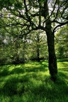 Green by scotto